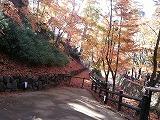 階段の上から見下ろした紅葉一杯の景色