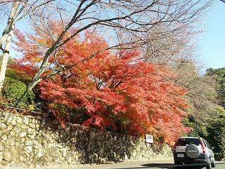 龍安寺の駐車場から見られるすばらしい紅葉