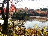 大きな池に色づいた落ち葉があり、周りの紅葉が映り込んで何とも言えない景色