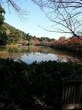 池の周りをゆっくり歩いて、反対側から見た景色、青空と紅葉と渡り鳥の声が調和している