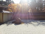 石庭の中に太陽の光が強く当たって、周りの木の陰が映り込んでいる