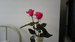 母の枕元に赤いバラの花があって