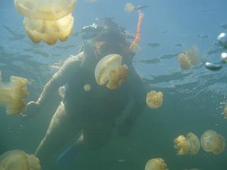群生するクラゲの中で泳ぐ私