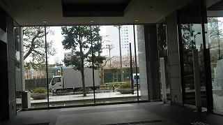 マンションの玄関から見える桜の木、ちょうど満開