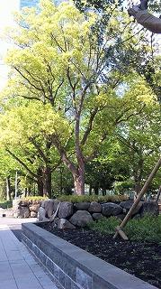 すっかり緑の葉が茂った大木