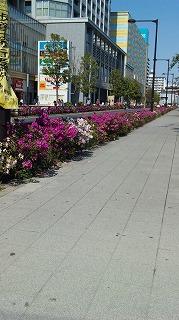 ツツジがきれいな公園の前の花壇