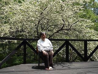 こなしの花の前で座っている私