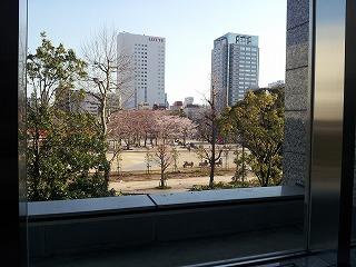 マンション3階のラウンジから見える桜の花